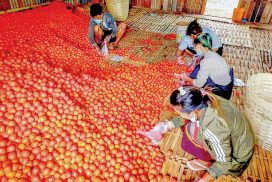 Tomato price rises by over K 10,000 this year