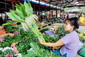 Dancing Girl Ginger plantation earns extra income for farmers