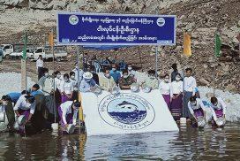 900,000 fingerlings released into Yeywa hydropower project reservoir in Kyaukse