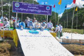 Sagaing Govt releases 200,000 fingerlings into Ayeyawady River