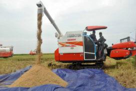 Myanmar rice market sees flat price in border despite sluggish trade