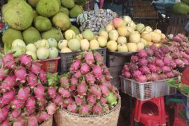 Dragon fruits from Popa sold for lower prices despite high yield