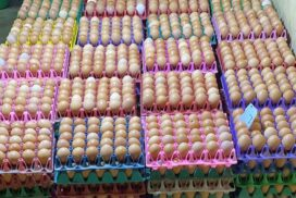Poultry breeders get good price of eggs
