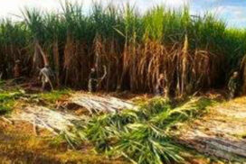 Sagaing Region sees 30 per cent of projected monsoon crop acres so far