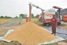 Rice price in domestic market rises to over K 5,000 per bag