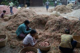 Onion market remains sluggish due to lack of foreign demand