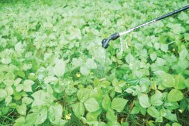 Chickpea price up by K40,000 per bag within one month