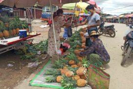 Rising price makes Kawlin pineapple retailers convenient