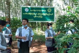 Over 600 acres of coffee cultivated in Sagaing Region