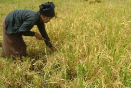 Rice price rises by K2,800 per bag in maximum within one month
