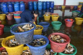 Myanmar aquaculture exports down by $66 mln this FY