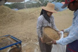 Myanmar Agro exports grow 25 per cent as of 20 Aug