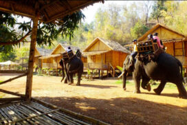 Shwesettaw Manchaung elephant camp to welcome tourists in post-COVID