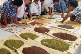 Myanmar ships $128 mln worth over 190,000 tonnes of pigeon peas this FY