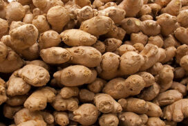 Ginger price drops due to surplus arrival