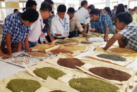 Pigeon pea prices double on extension of import validity period by India