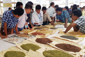 Heirloom bean price doubles on strong domestic, foreign demand