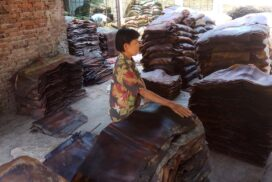 Rubber price in Mon state hikes this year