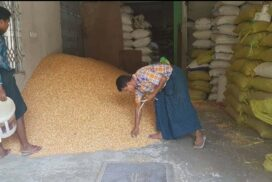 Myanmar ships over 27,000 tonnes of chickpea to external market as of 17 Sept