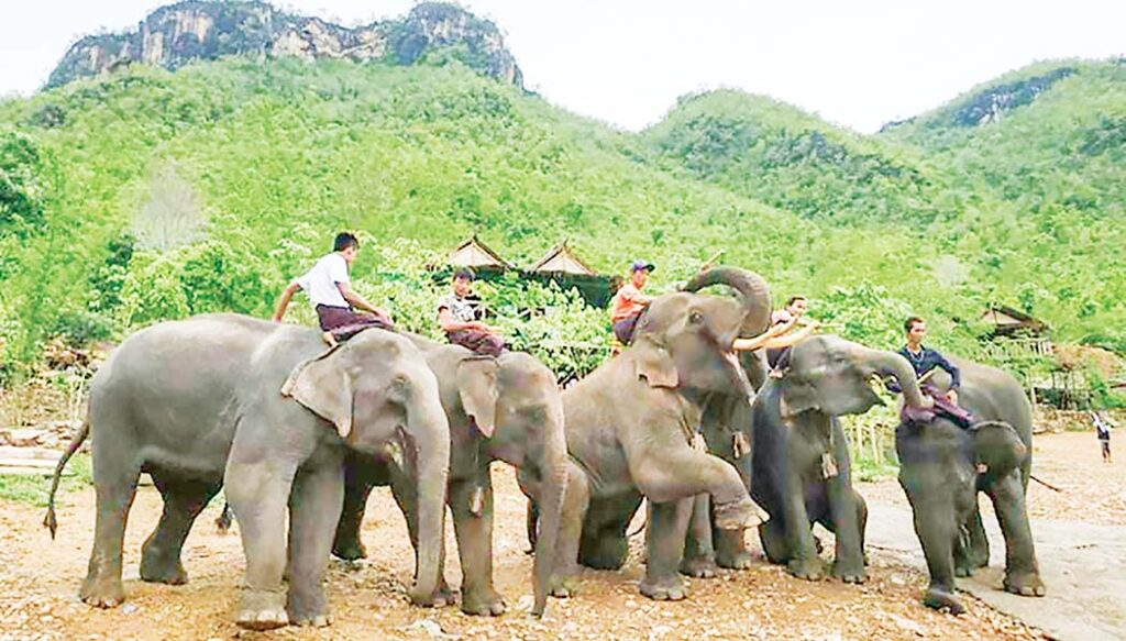 Wanet Elephant Camp prepping for tourism recovery