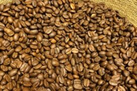 Over 600 acres of coffee cultivated in Sagaing region this year