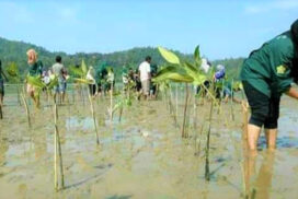 Over 380,000 acres of mangrove forests conserved in Rakhine State