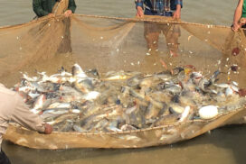 Myanmar aquaculture exports down by 8.6% in 2020-2021FY