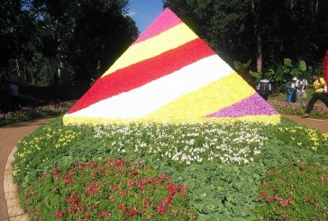 PyinOoLwin National Kandawgyi Gardens to host flower festival