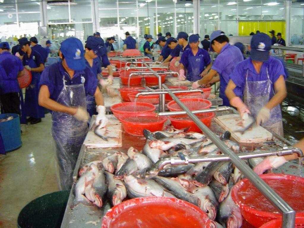 Workers in processing fish at a marine product industry to meet local demand so as to develop meat and fish sector of the State.