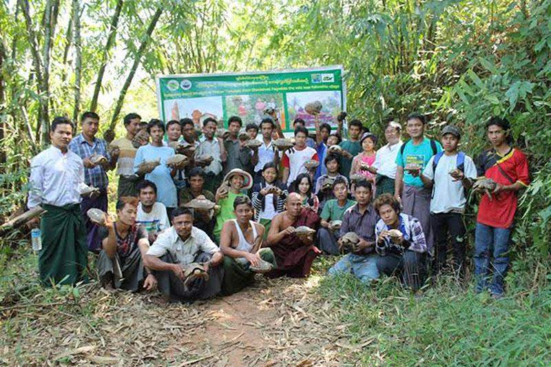 Volunteers ready to release yellow tortoises into water-shed area in  Yebyu Township.—Photo: WCS (Myanmar)