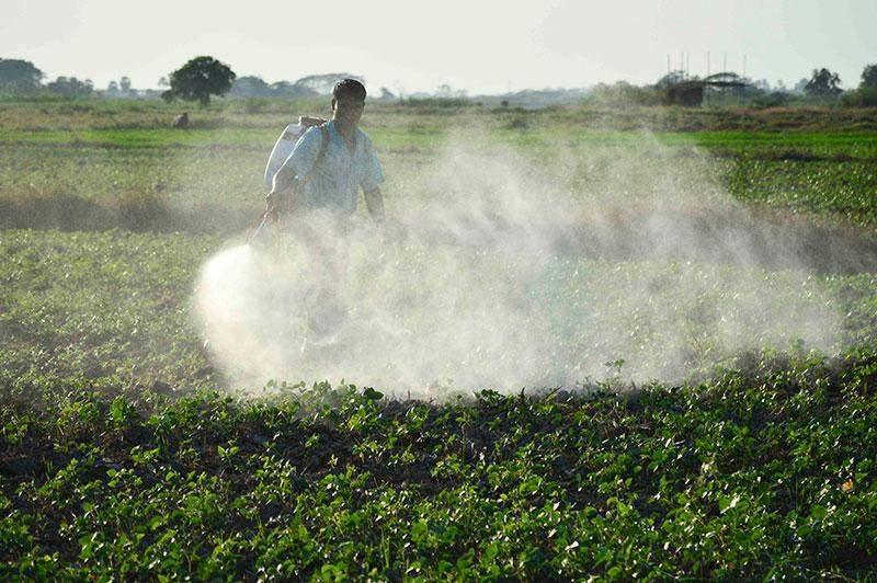 A farmer sprays pesticides on crops.—Photo: Aye Min Soe
