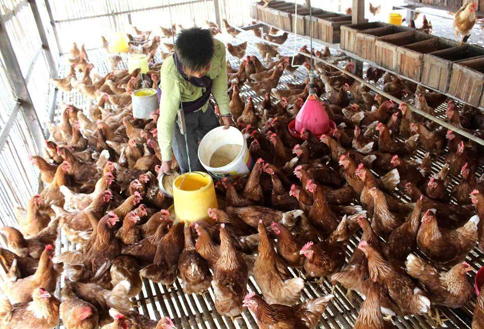 The Ministry of Health and the Ministry Livestock Breeding and Fisheries are working closely together to prevent H5N1, urging people to follow their instructions on preventing a pandemic.—Photo: Aye Min Soe