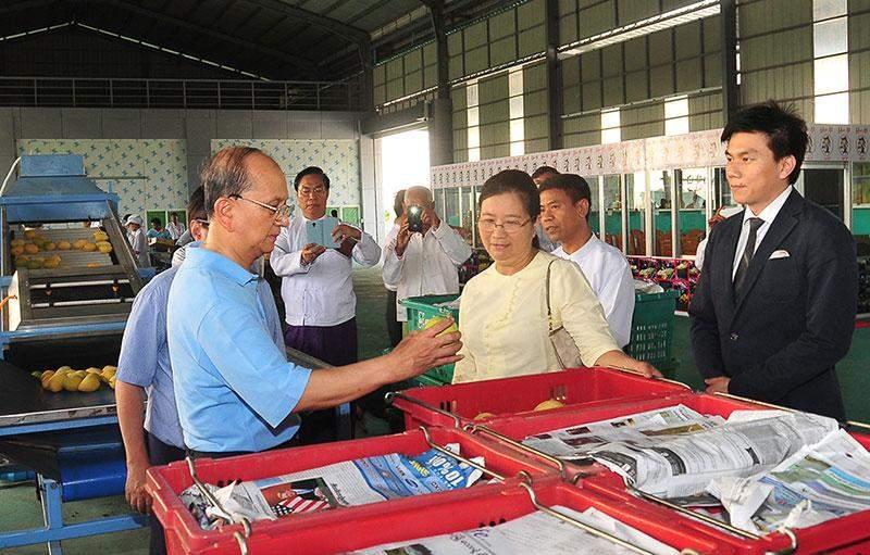 President U Thein Sein views export quality Seintalone mango of Myanmar Shwe Fruit Company.—MNA