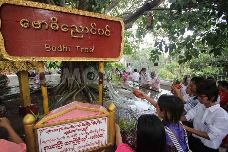 kason bodhi tree watering festival 4730607