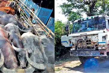 Action taken against cattle smugglers