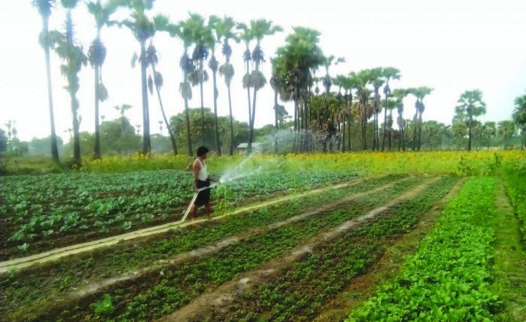 Farmers turn to seasonal crops to fulfil market demand.