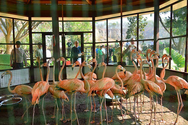 Flamingos donated by Japanese government are seen at Zoological Gardens in Nay Pyi Taw.