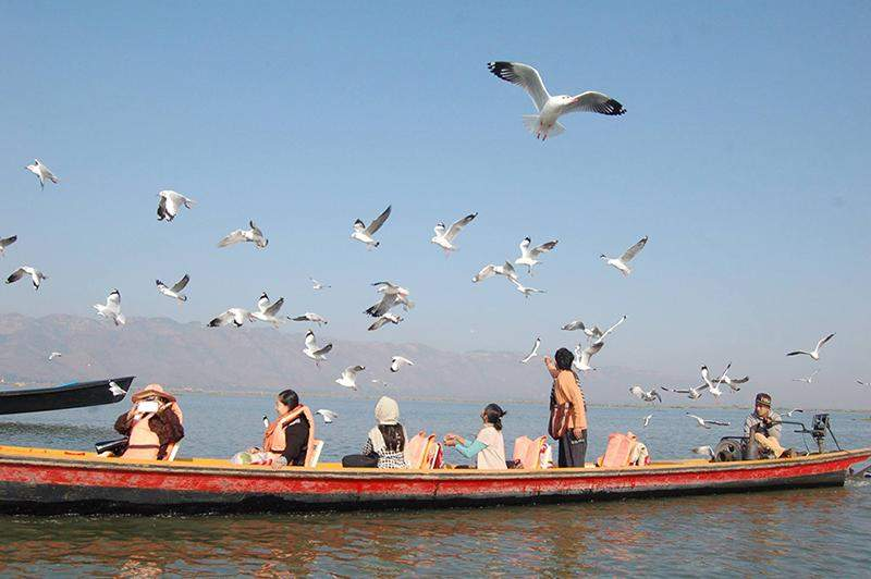 Visitors feed seagull as they take a boat trip in Inle Lake. Photo: Thant Zin Win