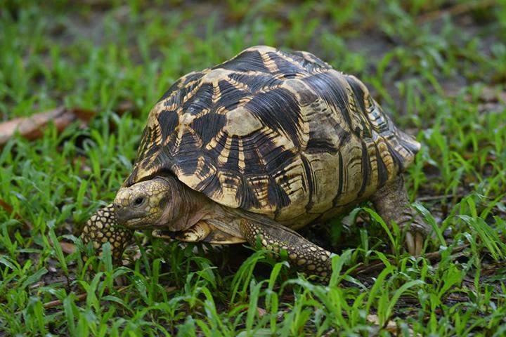 A tortoise seen in the farm.