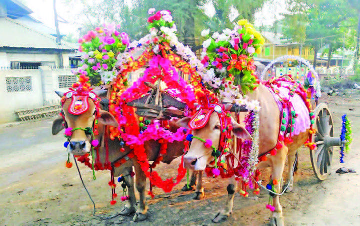 A decorated bullock cart is seen at a ceremony in Pwintbyu Township.