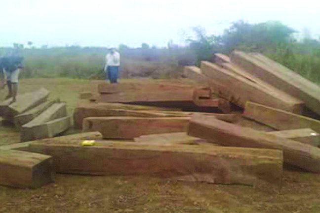 Illegal timber seized in Pale being seen.