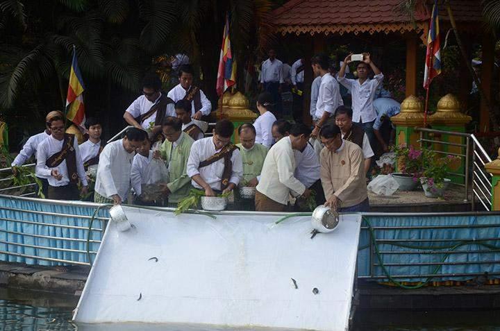Devotees release fingerlings into a lake in Yangon.