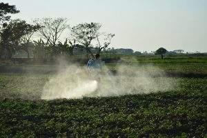 A farmer sprays pesticides on pea crop in Kawa, Bago Region. Photo Aye Min Soe