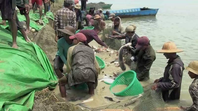 Men catch fish at the fish farm in Rakhine State.