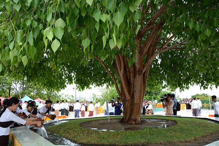 Buddhist devotees pour water onto the Bo Tree in Yangon.
