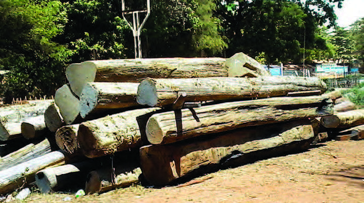 Logs tooked by thelocal robbers