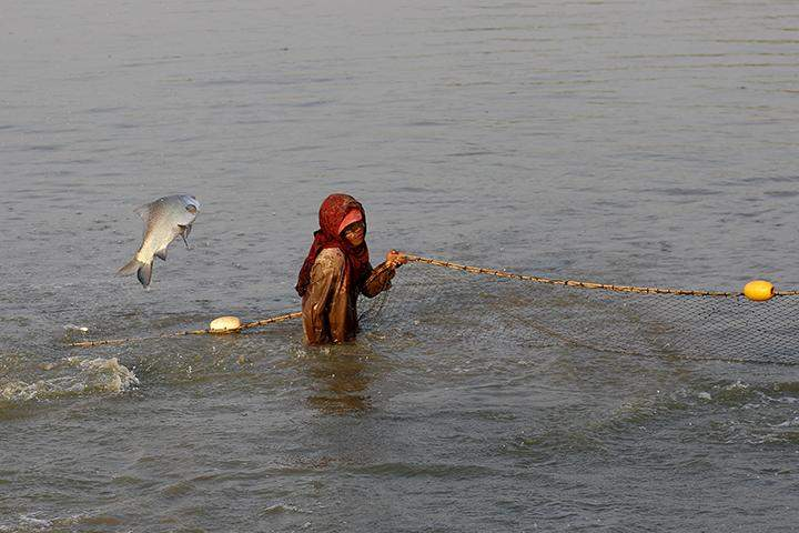 A worker fishing with a net in a fish farm at Htantabin township, outside Yangon.
