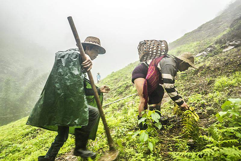 Farmers clear a steeply inclined field to ready it for planting poppy. The number of small-scale poppy farms in Shan State such as this one have increased over the past few years.