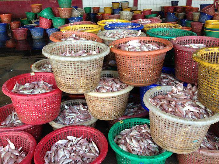 Sea fish are sorted at the Thida Jetty in Yangon.