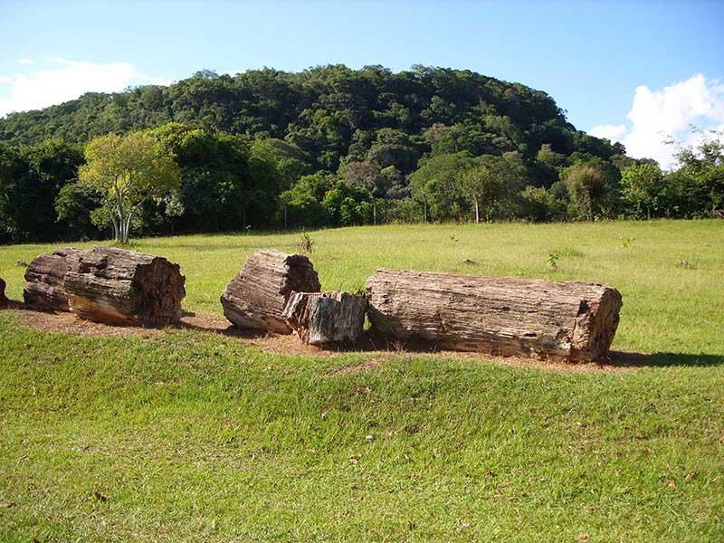 Parque paleobotânico de Mata. 72